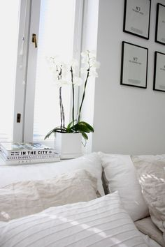 w h i t e | living room orchids