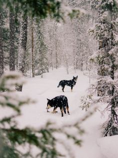Dogs of my life. Spitz Breeds, Winter Coffee, Winter Food, Winter Time, Winter Christmas, Loki, Finland, Primitives, Instagram Posts