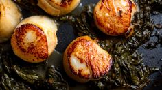 Scallops in Sorrel butter
