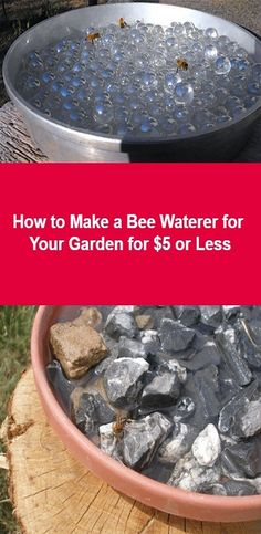How to Make a Bee Waterer for Your Garden for $5 or Less