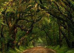 South Carolina Island by Jackie62