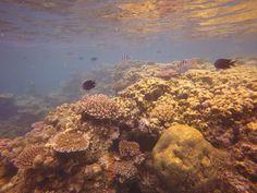 Port Havannah Vanuatu reef