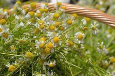 #flower #day # photooftheday #macro #nature photography #colorful #nature_briliance naturemacro #macroflower  #photographer