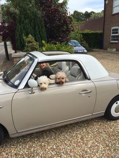 Nissan figaro taking the dogs out