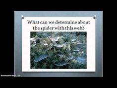 On the Hunt Part 1: Webs | BetterLesson