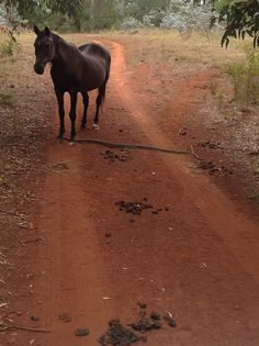 Friends a horse and a snake Bago, Snake, Journey, Horses, Friends, Animals, Amigos, Animales, Animaux