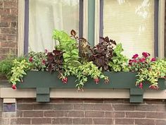 DIY gardening experts show how to add charm and color to a home with window boxes full of plants that will thrive in the shade.