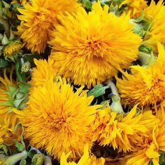 Teddy bear sunflowers! #sunflowers #teddybear #teddybearsunflower #flowers #flowerporn #flowermarket #flowerofinstagram #nyc #newyork #manhattan #chelsea #dscolor #DSFloral #dstexture #fall #adoration #yellowflowers