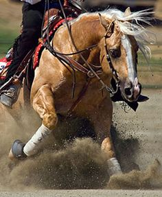 Always ride a palomino in any western equine event...can't help but be good.