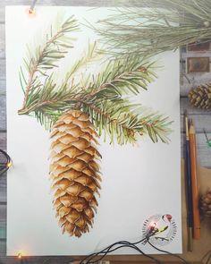 Меньше недели до самого волшебного и ожидаемого праздника в году Ждете, друзья?)  .  .  .  #art_dailydose #graphics #art #art_we_inspire #instaart #illustration #illustrator #sketch_daily #sketch #artwork #painted #artlovers #графика #botanical #tree #botany #ярисуюкаждыйдень #крадикакхудожник #ботаническая_иллюстрация #ботаническаяиллюстрация #artistic_share #botanicalart #cartel_watercolorists #arts_help #arts_promote #рисую_nacherdake #art_stupenka