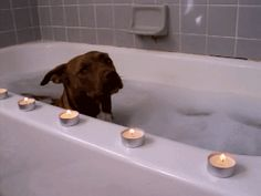 I need to do this for my dog Purdy!! She is always trying to jump in the bath.Must be something about Staffies, they love a bath!!!
