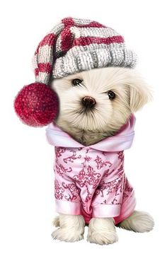 chiens,dog,puppies,wallpapers Cute Puppies, Cute Dogs, Dogs And Puppies, Animals And Pets, Baby Animals, Cute Animals, Cute Animal Drawings, Animal Sketches, Christmas Animals