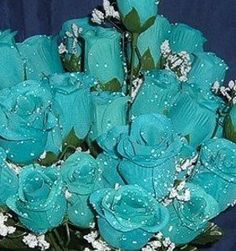 84 Silk Rose Flowers w/Raindrops - Wedding Flowers - Bridal/Floral - Turquoise IGC http://www.amazon.com/dp/B001J8PN1I/ref=cm_sw_r_pi_dp_ZR6fub0XFNRET