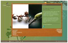 Casa Calma Wellness Hotel. Website. Diseñado por Bunker3022.