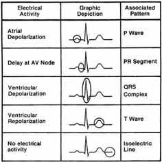 Heart Electrical Activity basics of a normal ECG Nursing School Tips, Nursing Tips, Nursing Notes, Nursing Schools, Nursing Programs, Nursing Cheat Sheet, College Nursing, Cardiac Nursing, Nursing Mnemonics