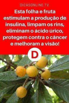 Nespereira | Esta folha e fruta estimulam a produção de insulina, limpam os rins, eliminam o ácido úrico, protegem contra o câncer e melhoram a visão! | Tanto a folha como a fruta fazem maravilhas pela saúde... Leia e saiba tudo ↓ ↓ ↓