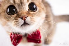What big eyes you have!