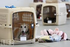 Keep Your Paws on the Road: Can Fido fly? - Your Dog travels in the Cargo Hold...
