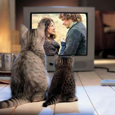 Even cats love Outlander! Cats with excellent taste