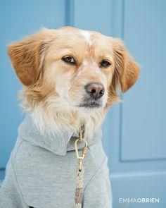 Chelsea dog photographer London  #rescuedog #chelsea #londondog #londonphotographer #londonphotoshoot #londonshootideas #dogphotos #cooldoors #london #dogoutfits #funnydogphotos #dogphotographer #londonshoot