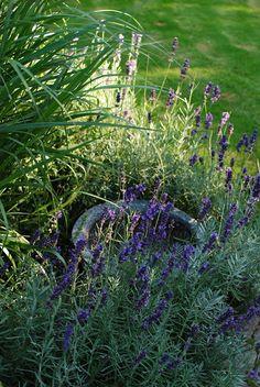 Almbacken: Vår trädgård