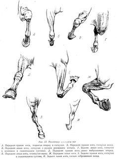 Horse Drawings, Animal Drawings, Art Drawings, Doodle Drawing, Painting & Drawing, Horse Sketch, Horse Anatomy, Horse Illustration, Horse Artwork