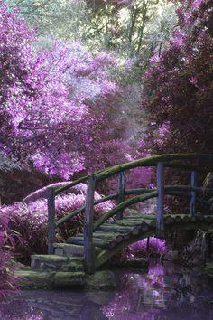 Download this free photo from Pexels at https://www.pexels.com/photo/bridge-purple-violet-dream-28449 #nature #bridge #purple