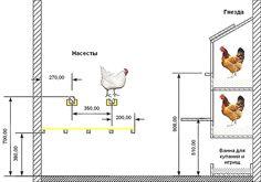 Схема обустройства курятника с оптимальными размерами для расположения насестов и гнезд