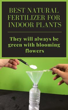 Best Natural Fertilizer For Indoor Plants! They Will Always Be Green With Blooming Flowers - Best Natural Fertilizer For Indoor Plants! They Will Always Be Green With Blooming Flowers – Gard - Indoor Flowering Plants, Best Indoor Plants, Indoor Flowers, Outdoor Plants, Inside Plants, Cool Plants, Shade Plants, Blooming Flowers, Home Made Fertilizer