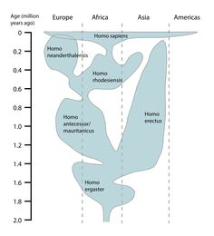 One Cur View Of The Temp And Geographic Distribution Genus Potions Other Interpretations Differ Human Evolution Chart En