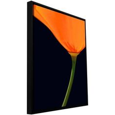 ArtWall Dean Uhlinger Pauma Valley Poppy Floater Framed Gallery-Wrapped Canvas, Size: 24 x 24, Green