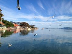 Ostradamus - Florianópolis