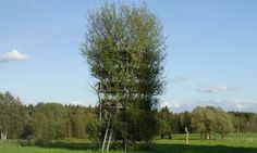 The architects shaped the willow saplings into crisscrossing formations and…