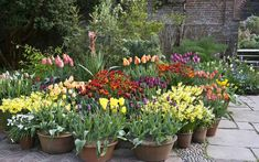 Do you throw away tulip bulbs after flowering? Take a few tips from an   ingenious head gardener