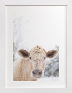 """""""moo cow"""" - Art Print by Emily Gilbert in beautiful frame options and a variety of sizes."""
