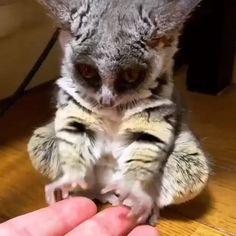 Wait for it! Cute Little Animals, Cute Funny Animals, Cute Cats, Big Cats, Funny Owls, Cute Animal Videos, Cute Animal Pictures, Animal Pics, Funny Pictures