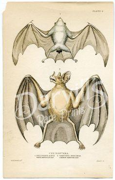 Vampire bat Vampire Bat, Frogs, Bats, Twinkle Twinkle, More Fun, Digital, Painting, Animals, Animales