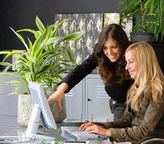 4 reasons your office needs plants find out how plants and feng shui can bring bringing feng shui office