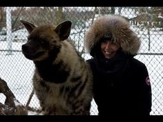 MTKS got to visit Jungle Cat World Wildlife Park this past winter and had an amazing time playing with their Striped Hyenas. Jungle Cat World, Striped Hyena, Wildlife Park, Conservation, Past, Winter Hats, Studio, Amazing, Animals