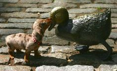 """Baxter, the mini-Dachshund, befriends one of the """"Make Way For Ducklings"""" statues in the Boston Public Garden"""
