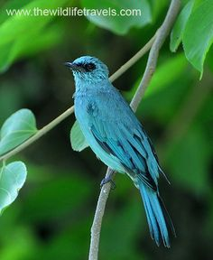 photos of birds | ,Bird Photo Gallery,India Birds Photo Gallery,India Bird Photo,Birds ...
