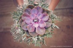 THIS. This will be my bouquet! Succulent Bouquet :: Captured Moments Photography :: Via ConfettiDaydreams.com
