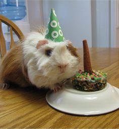 31 Animal Parties