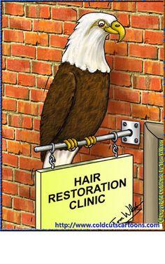 Hair restoration & the bald eagle