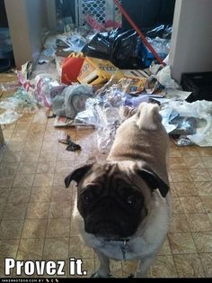 Innocent until proven guilty. (Soooo true!   I've cleaned up more messes like this than I care to remember)