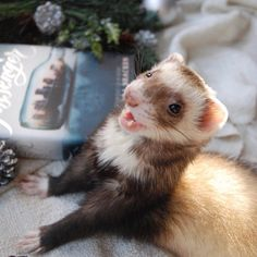 See this Instagram photo by @thebookferret • 845 likes