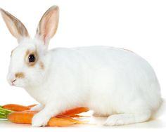 Free Heartwarming Rabbit Wallpapers  Naldz Graphics 640×480 Rabbit Image Wallpapers (53 Wallpapers) | Adorable Wallpapers