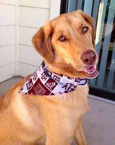 Aggie-inspired bandana for your pup! Texas A m cd54bf78f