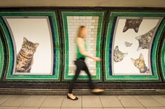 A passenger passes some of over 60 adverts in Clapham Common underground station. The Citizens Advertising Takeover Service (CATS) decided to display photos of animals in need of loving homes – so many of the pictures you can see are cats from Battersea Dogs and Cats Home or Cats Protection, the UK's largest feline welfare charity.