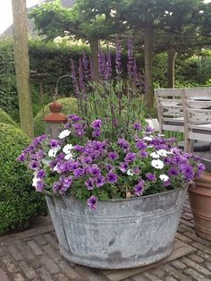Purple Petunia's and Salvia in metallic bucket